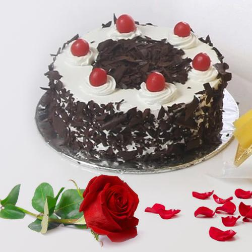 Sumptuous Black Forest Cake and a Fresh Red Rose