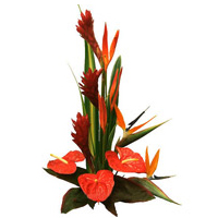 Passionate Birds of Paradise and Anthuriums Arrangement with Romantic Thrill