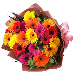 Blossoming Bunch of Gerberas in Attractive Colours