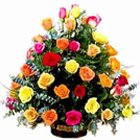Fragrant Various Colour Roses Collection