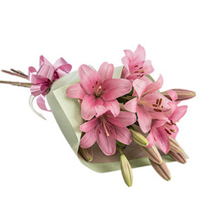 Vibrant Bouquet of Thriving Lilies