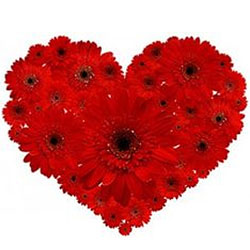 Stunning Heart-Shape Arrangement of Red Gerberas