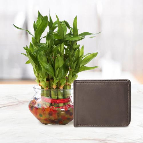 Lucky Mens Brown Leather Wallet from Rich Born with a 2 Tier Lucky Bamboo Plant for Good Luck