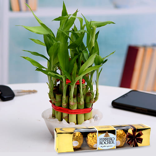 Vibrant Two Tier Bamboo Plant with Ferrero Rocher Chocolates