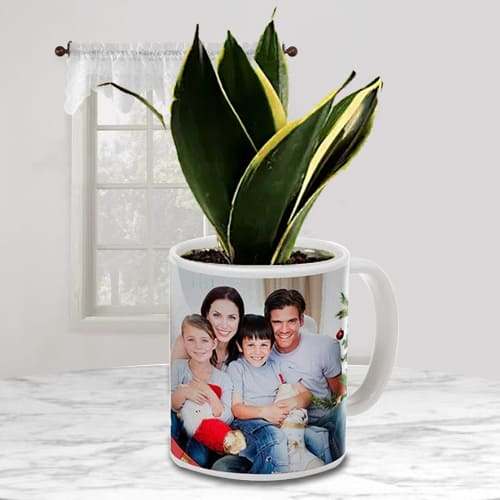Evergreen Present of Milt Sanseveria Plant in a Personalized Mug