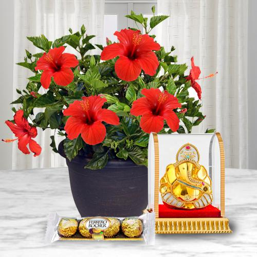 Good Luck Hibiscus Plant with Ganesh Idol N Chocolate
