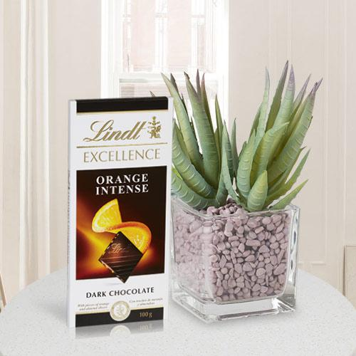 Aesthetic Combo of Aloe Vera Plant with Chocolate