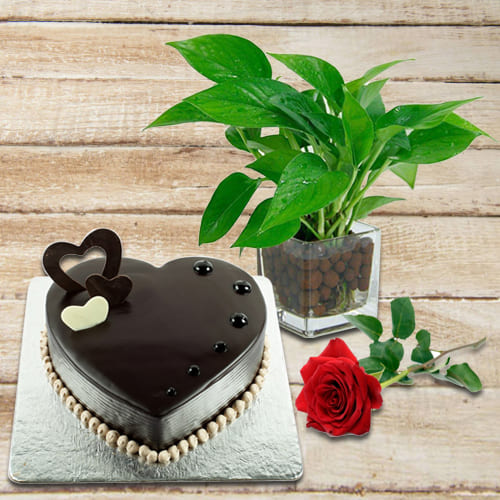 Captivating Combo of Good Luck Money Plant in Glass Pot with Delicious Heart Shape Chocolate Cake and Single Red Rose<br>