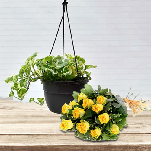 Symbol of Good Luck Hanging Money Plant with Rose Bouquet